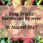 blog traffic increased